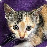 Adopt A Pet :: June - Watauga, TX