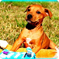Adopt A Pet :: Zeus~adopted! - Glastonbury, CT