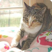Adopt A Pet :: Celeste - South Haven, MI