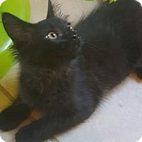 Adopt A Pet :: Addison - Griffin, GA