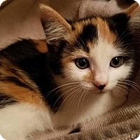 Adopt A Pet :: Nilla - Leonardtown, MD