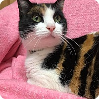 Adopt A Pet :: Lucy - Maryville, MO