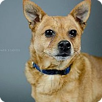 Adopt A Pet :: Rosco - Muskegon, MI