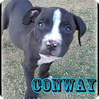 Adopt A Pet :: Conway - Bakersfield, CA