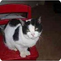 Adopt A Pet :: Mr. M - Hamburg, NY