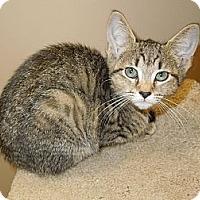 Adopt A Pet :: Jan - Medina, OH