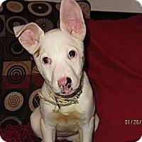 Adopt A Pet :: Valentine - Memphis, TN