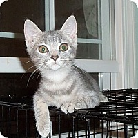 Adopt A Pet :: Angel - Catasauqua, PA