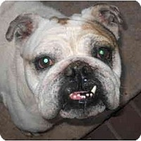 Adopt A Pet :: Oscar-Adopted! - San Diego, CA