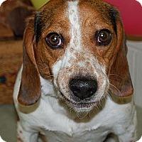 Adopt A Pet :: Titus - Novi, MI