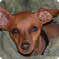 Adopt A Pet :: Aiden - Sacramento, CA