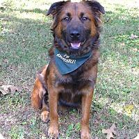 Adopt A Pet :: Raskell - Mocksville, NC