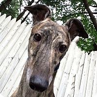 Adopt A Pet :: Cyrus - Swanzey, NH