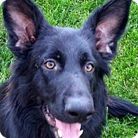 Adopt A Pet :: Vivienne - Oakley, CA
