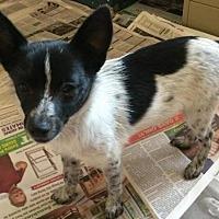 Adopt A Pet :: Levi - Phoenix, AZ