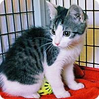 Adopt A Pet :: Sabina - Victor, NY