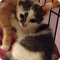 Adopt A Pet :: Wonton - East Brunswick, NJ