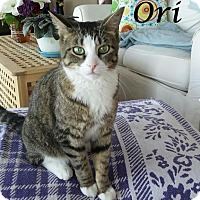 Adopt A Pet :: Ori - Ocean City, NJ