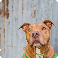 Adopt A Pet :: Watson (foster) - Portland, OR