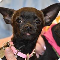 Adopt A Pet :: Saki - Scottsdale, AZ