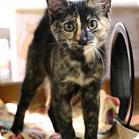 Adopt A Pet :: Dew Drop - Roseville, CA