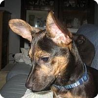Adopt A Pet :: Chiquis - El Cajon, CA