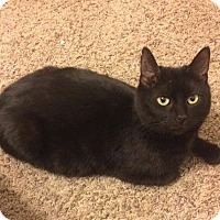 Adopt A Pet :: Busken - Covington, KY