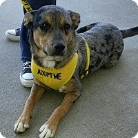 Adopt A Pet :: Ozzie - Wilmington, DE