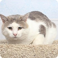 Adopt A Pet :: Deno - Chippewa Falls, WI