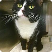 Adopt A Pet :: Bogie - Webster, MA