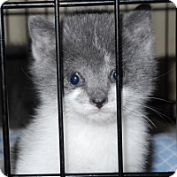 Adopt A Pet :: ANDALUSIA - Harrisburg, PA