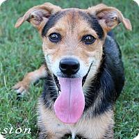 Adopt A Pet :: Winston - Texarkana, AR