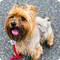 Adopt A Pet :: MOOSE - Upper Marlboro, MD