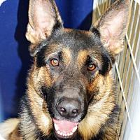 Adopt A Pet :: Spade - San Jacinto, CA