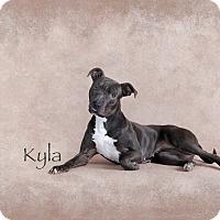Adopt A Pet :: Kyla - Des Moines, IA