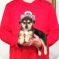 Adopt A Pet :: Cooper - South Euclid, OH
