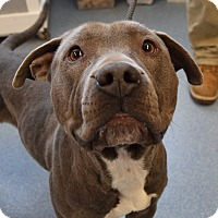 Adopt A Pet :: Rookie - Bay Shore, NY