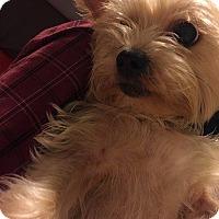 Adopt A Pet :: Diesel - Lorain, OH