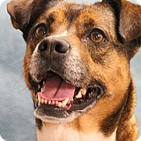 Adopt A Pet :: Sue - Knoxville, TN