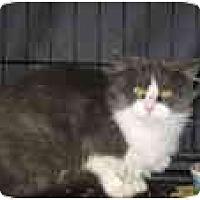 Adopt A Pet :: Suzette - Fullerton, CA
