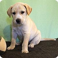 Adopt A Pet :: *Kiefer - PENDING - Westport, CT