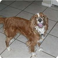 Adopt A Pet :: Suzie Freckles - Phoenix, AZ