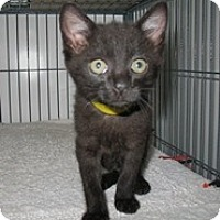 Adopt A Pet :: Mikey - Shelton, WA