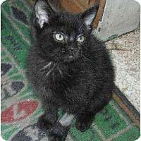 Adopt A Pet :: Quiches - Irvine, CA