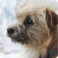 Adopt A Pet :: AUSTIN - san diego, CA