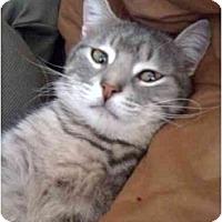 Adopt A Pet :: Milo - Modesto, CA