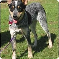 Adopt A Pet :: Riley *Adoption Pending* - Phoenix, AZ