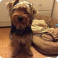 Adopt A Pet :: BENJAMIN - Encino, CA
