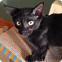 Adopt A Pet :: Bitsy - Byron Center, MI
