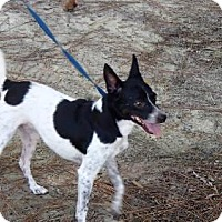 Adopt A Pet :: CHIPPEN - Oviedo, FL